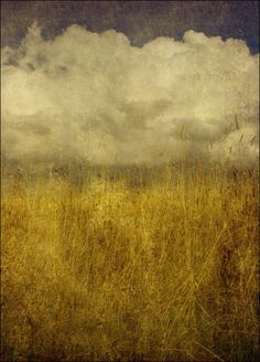 The Midst of Grasses by Stuart Lee This photo is very much like a contemporary painting. Love it.