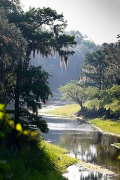 """""""Way down upon the Swannee River..far,far from home..longing for the old folks at home and the plantations they held so dear. Stephen Foster's famous song is one we Southern folks hold dear."""
