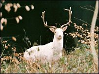 white stag - contact with supernatural beings; keen scent, grace swiftness, and gentleness
