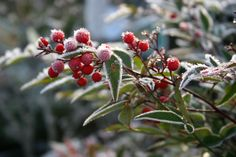 Frosty days bring about the best in interesting and unusual foliage in your winter garden.