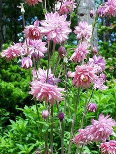 The dos and donts of deadheading~