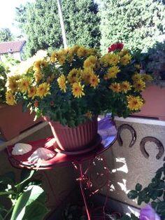 Sul mio balcone - dicembre.