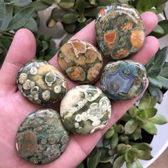 Rainforest Jasper (Rhyolite) - Medium Pocket Stone — Monk and Moon Crystal Healing Stones, Stones And Crystals, Gem Stones, Story Stones, Beach Stones, Tumbled Stones, Blue Crystals, Minerals And Gemstones, Rocks And Minerals