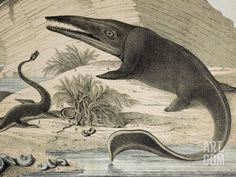 """Coloured lithograph of Plesiosaur and ichthyosaur, a contemporary continental version of the wall chart by Benjamin Waterhouse Hawkins entitled """"Waterhouse Hawkins Diagrams of the Extinct Animals"""". He produced six for the Department of Science and Art. Dinosaur Posters, Dinosaur Art, Prehistoric World, Prehistoric Creatures, Extinct Animals, Science Photos, Sea Monsters, Nature Pictures, Fine Art Prints"""