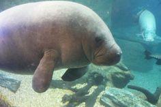 Dallas World Aquarium, Dallas, Texas.