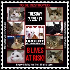 "TO BE DESTROYED 7/25/17 - - Info  Please share View tonight's list here: http://nyccats.urgentpodr.org/tbd-cats-page/. The shelter closes at 8pm. Go to the ACC website( http:/www.nycacc.org/PublicAtRisk.htm) ASAP to adopt a PUBLIC LIST cat (noted with a ""P"" on their profile) and/or … CLICK HERE FOR ADDITIONAL…Please…Please...-  Click for info & Current Status: http://nyccats.urgentpodr.org/to-be-destroyed-32017/"