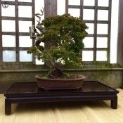 bonsai display stand