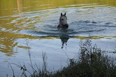 Agua y caballo