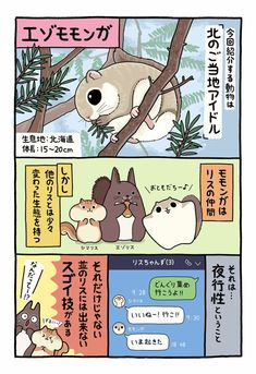 Like Animals, Unique Animals, Japanese Animals, Girly Drawings, Animal Facts, Wild Ones, Chipmunks, Mammals, Squirrel