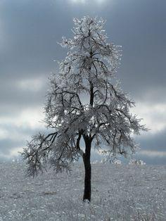 tree by ansel adams