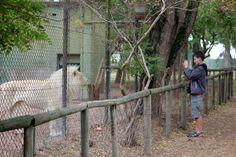 Tygerberg Zoo...pretty kitty :)