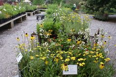 We sell over 300 varieties of perennials at Northwind Perennial Farm. Photo by Cindy Almerico