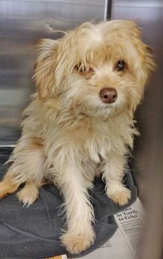 She is just 5 months and so adorable. This little baby girl is not happy about being in the shelter and she is in the medical building. Please take a look at her Video and SHARE, a FOSTER would get her a home for the new year. Thanks! #A4788187 I'm an approximately 5 month old female terrier. I am not yet spayed. https://www.facebook.com/171850219654287/photos/pb.171850219654287.-2207520000.1420240122./353666928139281/?type=3&theater