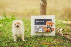 Ensaio gestante | Fotografia de família | Fotografia Jaraguá do Sul | Parque Malwee | Cachorro | Dog | Mel Maieski Fotografia