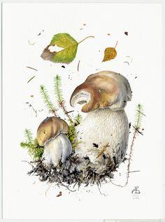 http://www.pelcor.com/mushrooms/PagesOriginals/Boletus edulis VI Or.html