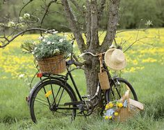 There is something about a bicycle, with a basket and a straw hat, just sitting next to a tree in a field of flowers. Love it.