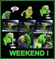 Kermit the frog :D Asshole Quotes, Funny Quotes, Funny Memes, Hilarious, Word Pictures, Funny Pictures, Funny Pics, Sapo Kermit, Weekend Meme