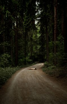 Nudes by Sonia Szóstak | iGNANT.de #portrait #forest #nude