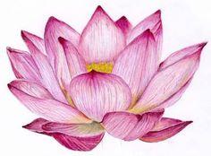 lotus drawing lotus flowers drawings in pencil lotus flower - lotus flower drawing color Pencil Drawings Of Flowers, Realistic Pencil Drawings, Flower Sketches, Watercolor Lotus, Lotus Painting, Watercolor Flowers, Lotus Drawing, Lotus Flower Art, Fantasy Anime