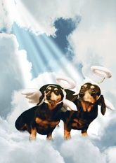 """Musical dachshund encouragement or friendship card, featuring the singing dachshund, Lucy Lou. Inside message: """"Thank heaven for a friend like you!"""