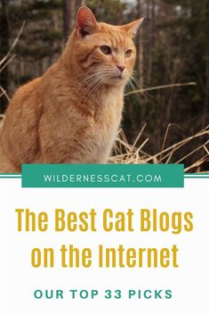 All Cat Breeds, Cat Behavior Problems, Information About Cats, Cat Water Fountain, Cat Nutrition, Animal Help, Funny Cat Memes, Cat Facts, Love Pet