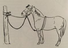 This is called a puller tie or belly rope tie. It helps teach a horse go give to pressure. If the horse pulls back it takes some of the strain and pressure off the horse& face and neck. Horse Riding Tips, Horse Tips, Clydesdale, Horse Exercises, Horse Anatomy, Horse Facts, Horse Camp, Horse World, Horse Training