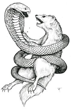 snake drawings for kids   King Cobra Coloring Pages ...