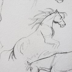 Wild Horses Sketching by Carrie Kohan Horse Sketch, Wild Horses, Carrie, Sketching, Illustration, Artwork, Animals, Inspiration, Biblical Inspiration