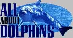 Scholastic website with dolphin info