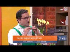 Orkide (Orchidaceae) - Özelliği, Çoğaltımı, Bakımı, Sulaması, Budaması 2. Bölüm - YouTube