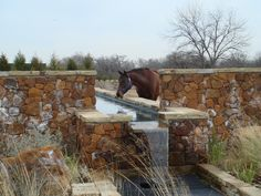 Outdoor watering trough becomes part of the landscaping in this horse's pasture