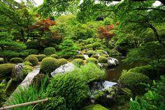 三室戸寺の緑の池泉回遊式庭園