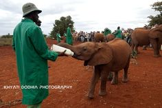 david sheldrick foundation - Google Search