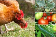 Gunoiul de la păsările de curte, precum cel de la găini sau de la rațe, este un îngrășământ extrem de fertil, mai ales pentru grădina de legume, dar și pentru pomii fructiferi. Foarte bogat Garden Design, Gardening, Mai, Agriculture, Tomatoes, Plant, Garten, Backyard Landscape Design, Landscape Designs