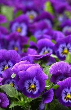 Purple flower flowers nature beauty beautiful