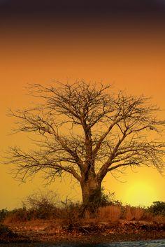 Siné Saloum, Sénégal -   Baobab Night (by Petits Voyages)