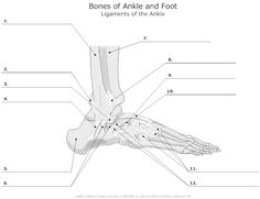 1000 images about anatomy on pinterest worksheets bone jewelry and anatomy. Black Bedroom Furniture Sets. Home Design Ideas