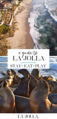 A guide to La Jolla! Where to stay, eat, play and explore to make the most out of your Southern California vacation! La Jolla Mom #lajolla #lajollatravelguide Lakes In California, La Jolla California, Southern California Beaches, California Vacation, La Jolla San Diego, San Diego Travel, Vacation Places, Travel Usa, Travel Tips