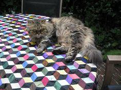 dutch quilt cat: cat on quilt -england tour( 3)
