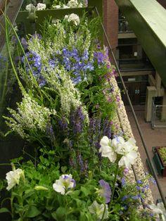Summer window box... white geranium, rosemary and petunia