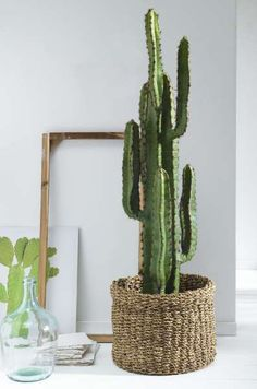 Wohnzimmer Kunstpflanze KAKTUS (DH cm) How To Choose The Best Dehumidifier The dehumidifier i Cactus House Plants, Indoor Cactus, House Plants Decor, Cactus Art, Cactus Flower, Plant Decor, Garden Cactus, Fake Plants, Artificial Plants
