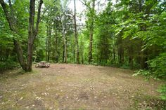 Sibbald Point Provincial Park, East Campground, Camping in Ontario Parks Ontario Parks, Canada, Camping, Plants, Summer, Campsite, Summer Time, Flora, Plant