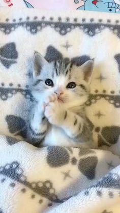 Baby Animals Super Cute, Cute Baby Cats, Cute Little Animals, Cute Cats And Kittens, Kittens Cutest, Kittens Meowing, Funny Kittens, Super Cute Cats, Baby Kitty