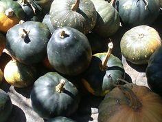 Otras calabazas también de temporada de cosecha. La calabaza es por lo general el primer producto de la milpa.