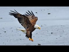 Ok, so don't actually throw away your wide angle lens. This video has been made to show that not all landscape images need to be photographed with a wide ang... Photography Gallery, Wildlife Photography, Outdoor Photography, Landscape Photography, Kodiak Island, Cockatiel, Birds Of Prey, Eagles, Bald Eagle