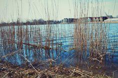 Shot with a Nikon D3200  Edited with VSCO  #photography #photo #picture #camera #photographer #vsco #vscocam #jj #jj_community #creative #art #edit #joshsterckx #lgg3 #nikon #d3200 #nikond3200 #water #cirencester #lake #plants #cotswold #cotswolds #cotswoldwaterpark #path #reeds #blue