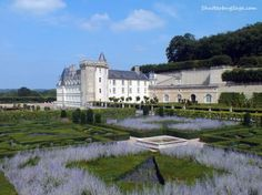 Lavender Gardens at Chateau de Villandry, Loire Valley, France