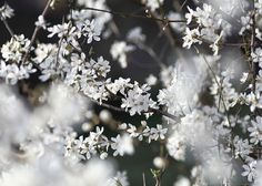 Spring blossoms, greeting cards, In stock