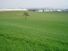 2009, 안성목장