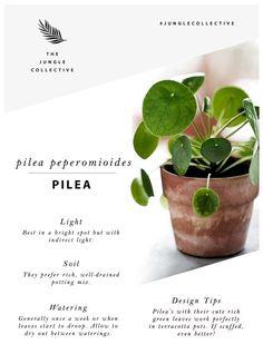 Pilea pilea pilea – Best Garden Plants And Planting Cactus House Plants, Potted Plants, Garden Plants, Pothos Plant, Peperomia Plant, Indoor Cactus, Cactus Art, Cacti, Indoor House Plants